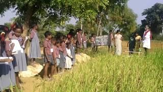 Pups Chinnadevanpatty -eco activity