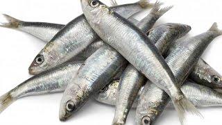 هل تعلم ماذا يحصل لك إذا تناولت سمك السردين أسبوعيا.. مدهش !