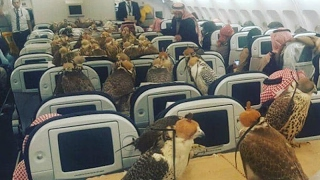 Saudi Prince Books Flight for his 80 Hawks watch video