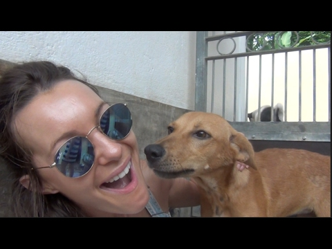 Xxx Mp4 Saving Stray Dogs In Sri Lanka 3gp Sex