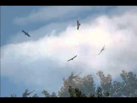 RedBird51's Visit to Decorah Eagles