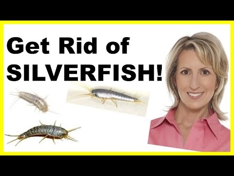 HOW TO GET RID OF SILVERFISH NATURALLY & EASILY