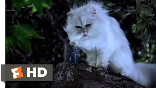 Stuart Little (1999) - You Saved Me? Scene (9/10) | Movieclips
