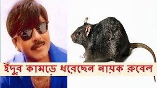 ইঁদুর কামড়ে ধরেছেন নায়ক রুবেল - Bangla Actor Rubel's Update