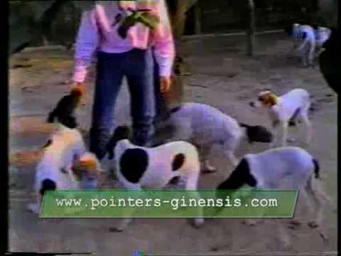 POINTERS DEL VENTO GIORGIO GUBERTI 1