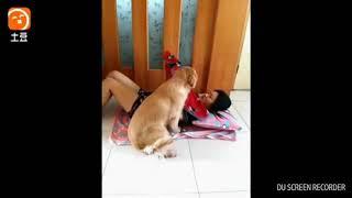 Cewek cantik main sama anjing...