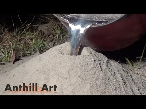 Casting a Fire Ant Colony with Molten Aluminum Cast 043