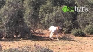 Caça às Perdizes com Cão de Parar - Espanha