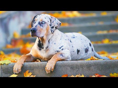 World s RAREST Dog Breeds Ever