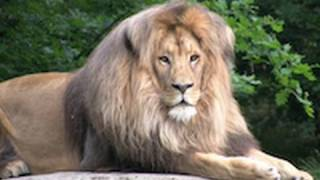 Zoo Leipzig - Africa