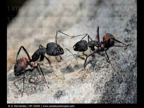 Eduardo Galeano Las hormigas