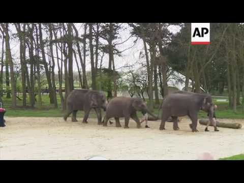 Xxx Mp4 Raw UK Queen Feeds Bananas To Elephants At Zoo 3gp Sex