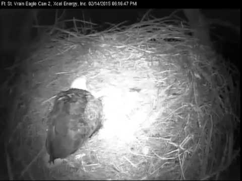 Fort St Vrain 2-14-2015 first egg