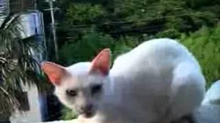 chat musulman dérangé pendant la prière