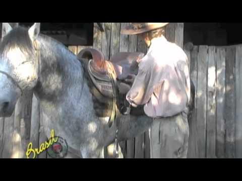 Detalhando Encilha do cavalo