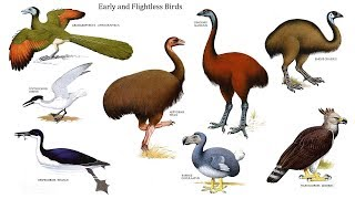 Learn English Birds Names - Best 3D Animation Collection of Rhymes for Children in English