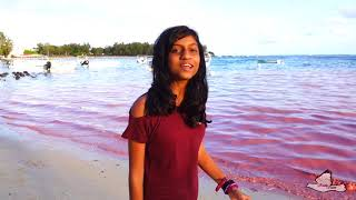 2018-10-25 - The Sea turned pink at Blue Bay - Mauritius