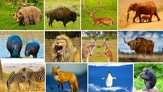 Wildtiere für Kinder auf Deutsch Tierische Töne und Namen Lernen für Kleinkinder