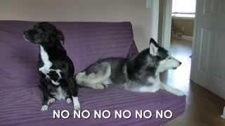 Mishka the Talking Husky is Mad! - SUBTITLED