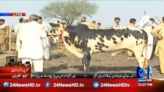 24 Report: Islamabad cattle markets were crowded with buyers