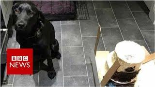 Dog eats wedding cake on morning of couple's big day - BBC News
