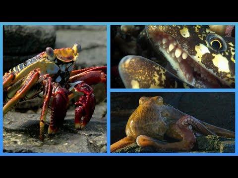 Xxx Mp4 Crab Vs Eel Vs Octopus Blue Planet II 3gp Sex