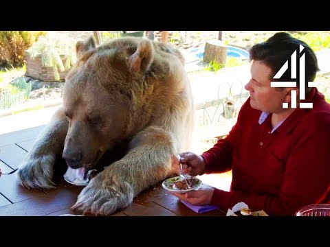 Xxx Mp4 Breakfast With Your Pet Bear Bear About The House Me My Supersized Pet 3gp Sex