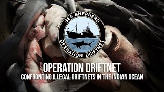 Shocking Footage of Illegal Fishing in the Indian Ocean