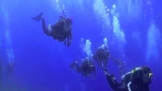 Shark Adventure - 3