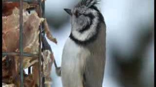 BBC Winterwatch 2013 - Episode 2