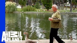 Man and Goose: A Love Story