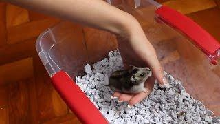 Como ensinar o hamster a subir na mão!
