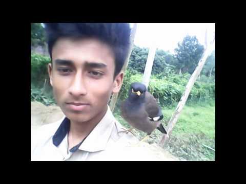 Xxx Mp4 Desi Salik Bird Animal Video Indian Bangla 3gp Sex