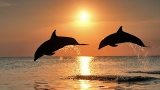 Save Endangered Dolphins – Keep Them Wild & Free