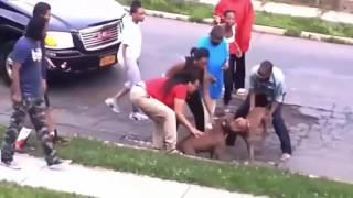 10 Worst Pitt Bull Attack PITBULL ATTACK