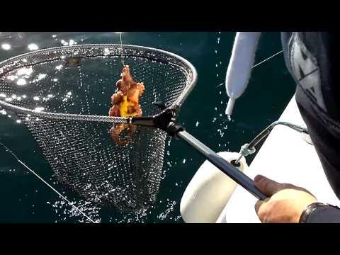 pescare polpi con zampa di gallina