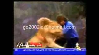 شاهد وفاء هذا الأسد سبحان الله ( مشهد مؤثر )