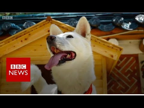 Xxx Mp4 Kim Jong Un's Gift Of Dogs And Other Signs Of Friendship BBC News 3gp Sex