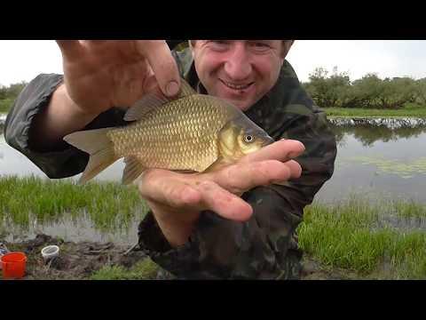 рыбалка в алтайском крае на карася видео