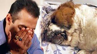 Salman Khan Buries His Dog Saint At His Panvel Farmhouse
