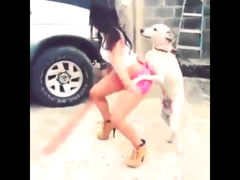 Horny dog dancing with a sexy woman :DDD