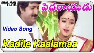 Pedarayudu Movie || Kadile Kaalamaa  Video Song || Mohan Babu,Soundarya