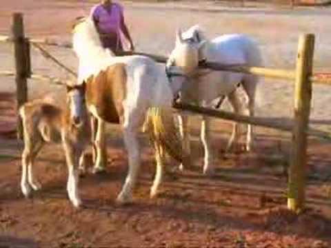 Rufiação pony