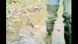 MSV. Woody streams deep flooding & mudding in my PROS WRC02 hip waders.