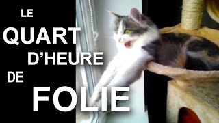 LE QUART D'HEURE DE FOLIE - PAROLE DE CHAT