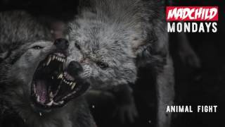 Madchild - Animal Fight (Produced by C-Lance)
