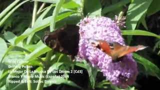 Wild Flower -Drifting Polen [16:9 HD Video] Chillout, World Music