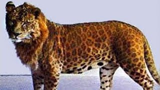 7 of the World's Most Dangerous Hybrid Animals