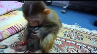 luccy & shakira  میمون لوسی و موسیقی