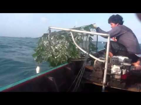 Ψαρεμα καλαμαριού με κιουρτους 2 Kalamari catch
